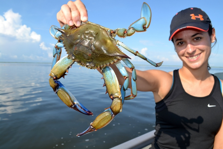 blue crabs Here is a classic method for steaming delicious atlantic blue crabs serve on big pieces of newspaper to make cleanup a breeze.